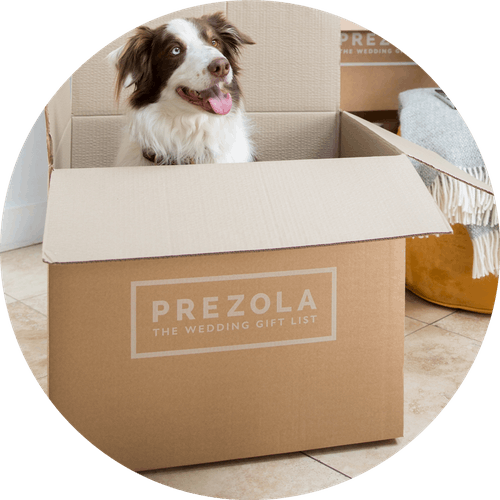 Border collie sat in Prezola gift list delivery box