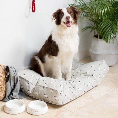 Border Collie sat on Sophie Allport dog bed